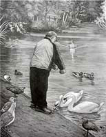 wildlife painting Feeding Birds & Swans in the park Pencil Sketches / Drawings / Illustration ? Ink Drawings & Original Art by Vancouver BC Artist Kim Hunter a.k.a.INDIGO CREATIVE ENDEAVOURS