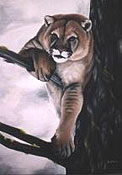 Wildlife Paintings Cougar painting wildlife  painting mountain lion Draped over Tree Oil Painting wildlife painting Canadian Artist Kim Hunter / Indigo Commissioned paintings welcome!