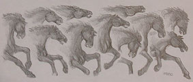 Wildlife Sketches Pencil Sketch Horse Concept drawing for a mural on a bar at Diavlo's restaurant pencil drawing  by contemporary Canadian Artist INDIGO aka Kim Hunter