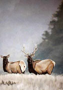 Wildlife Paintings Elk painting in Misty Mountains, wildlife painting Canadian Artist Kim Hunter / Indigo Commissioned paintings welcome!