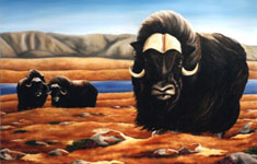 wildlife painting muskox wildlife oil painting ,Original Muskox on Autumn Tundra Oil wildlife painting by Canadian Artist Kim Hunter / Indigo Commissioned paintings welcome!